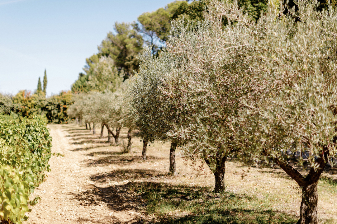 destination wedding in provence (olive trees) by Muriel Saldalamacchia wedding planner Photo by Remi Dupac