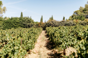 destination wedding in provence (vineyards 1) by Muriel Saldalamacchia wedding planner Photo by Remi Dupac