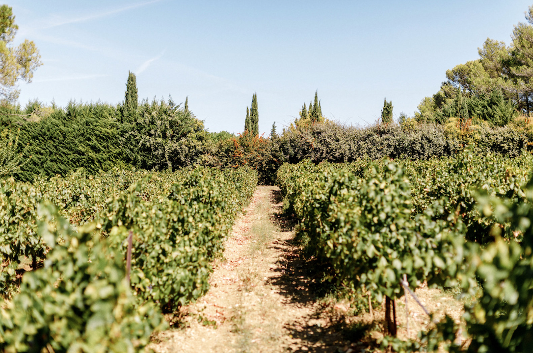 destination wedding in provence (vineyards 1) by Muriel Saldalamacchia wedding planner Photo by Remi Dupac